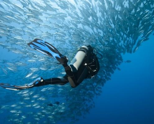 best-dive-sites-1532680399-785X440